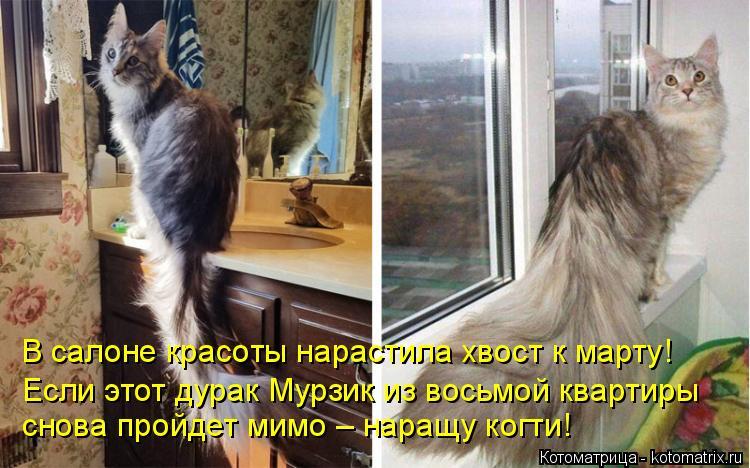 Котоматрица: В салоне красоты нарастила хвост к марту! Если этот дурак Мурзик из восьмой квартиры снова пройдет мимо – наращу когти!