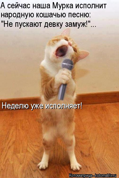 """Котоматрица: А сейчас наша Мурка исполнит народную кошачью песню: """"Не пускают девку замуж!""""... Неделю уже исполняет!"""