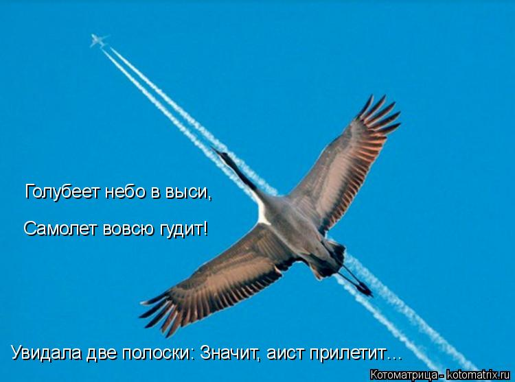 Котоматрица: Голубеет небо в выси, Самолет вовсю гудит! Увидала две полоски: Значит, аист прилетит…