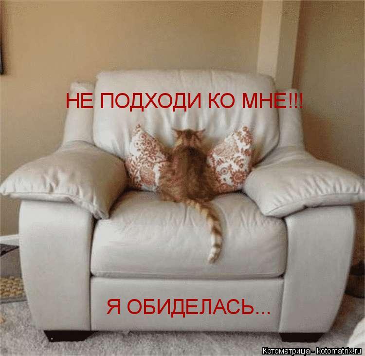 Котоматрица: НЕ ПОДХОДИ КО МНЕ!!! Я ОБИДЕЛАСЬ...