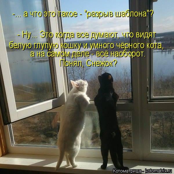 """Котоматрица: -... а что это такое - """"разрыв шаблона""""? - Ну... Это когда все думают, что видят а на самом деле - всё наоборот. Понял, Снежок? белую глупую кошку и у?"""