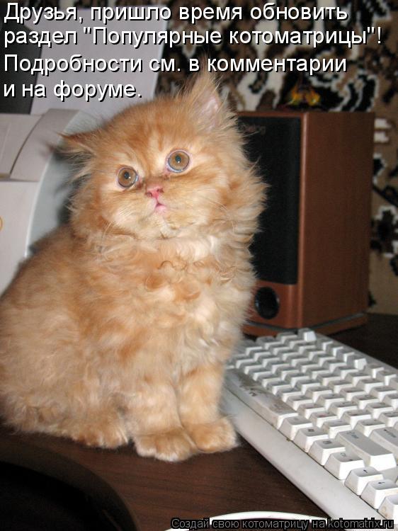 """Котоматрица: Друзья, пришло время обновить раздел """"Популярные котоматрицы""""! Подробности см. в комментарии и на форуме."""