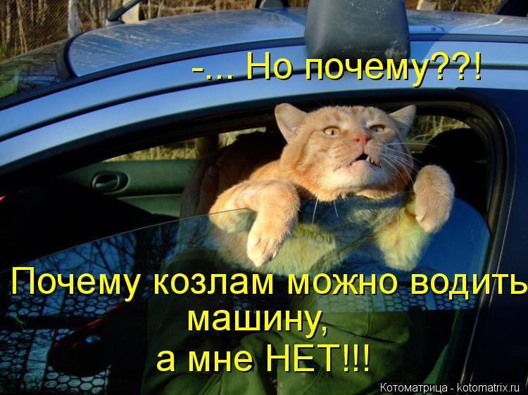 Котоматрица: -... Но почему??! Почему козлам можно водить машину, а мне НЕТ!!!