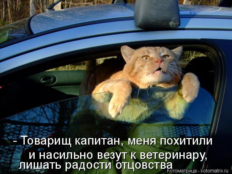 Котоматрица: - Товарищ капитан, меня похитили и насильно везут к ветеринару, лишать радости отцовства