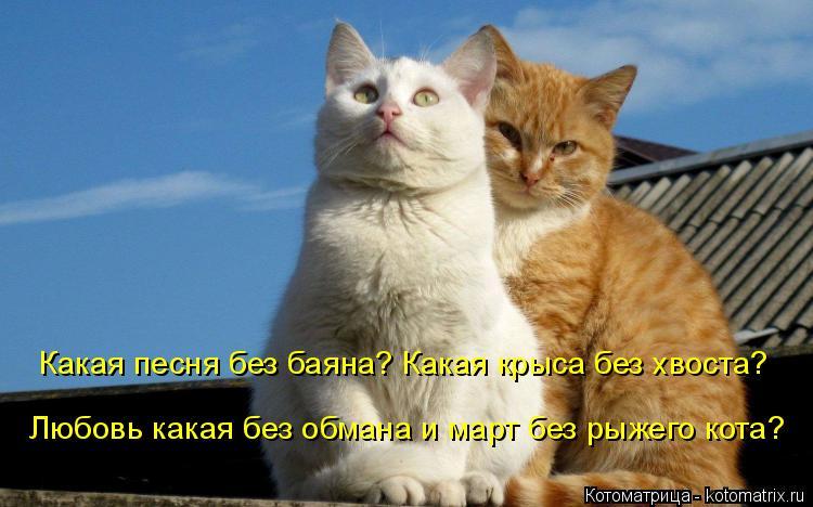 Котоматрица: Какая песня без баяна? Какая крыса без хвоста? Любовь какая без обмана и март без рыжего кота?