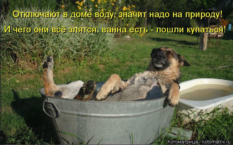 Котоматрица: Отключают в доме воду, значит надо на природу! И чего они всё злятся: ванна есть - пошли купаться!