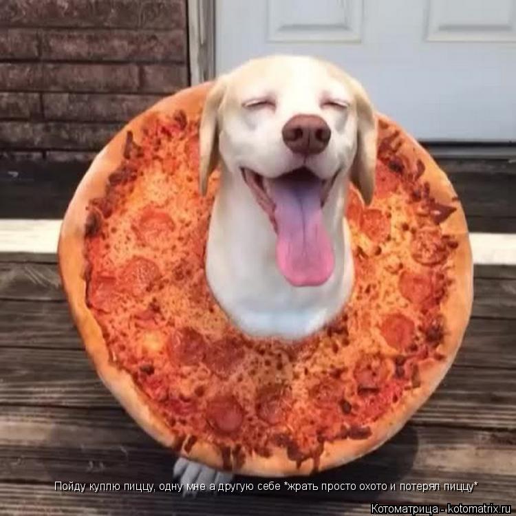 Котоматрица: Пойду куплю пиццу, одну мне а другую себе *жрать просто охото и потерял пиццу*