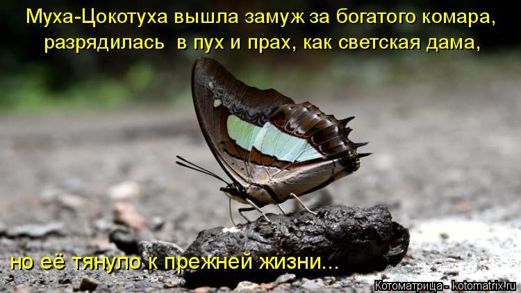 Котоматрица: Муха-Цокотуха вышла замуж за богатого комара, разрядилась  в пух и прах, как светская дама, но её тянуло к прежней жизни...