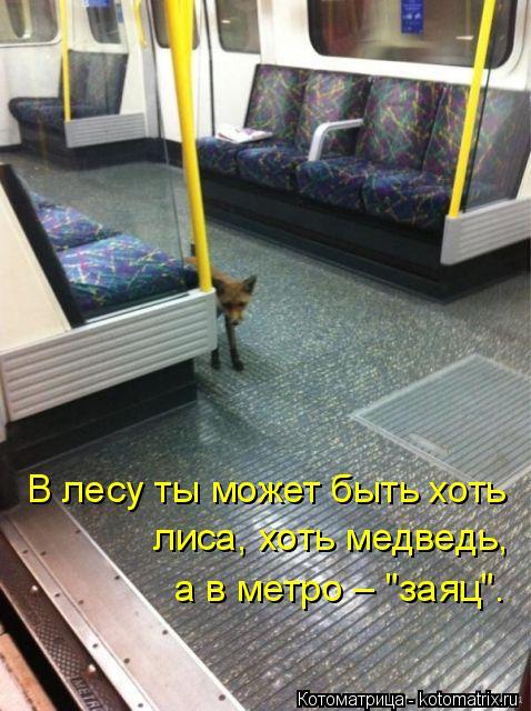 """Котоматрица: В лесу ты может быть хоть  лиса, хоть медведь, а в метро – """"заяц""""."""