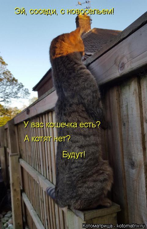 Котоматрица: Эй, соседи, с новосельем!  У вас кошечка есть? А котят нет? Будут!