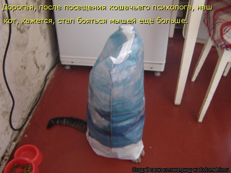 Котоматрица: Дорогая, после посещения кошачьего психолога, наш кот, кажется, стал бояться мышей ещё больше.