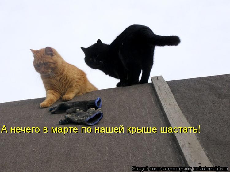 Котоматрица: А нечего в марте по нашей крыше шастать!