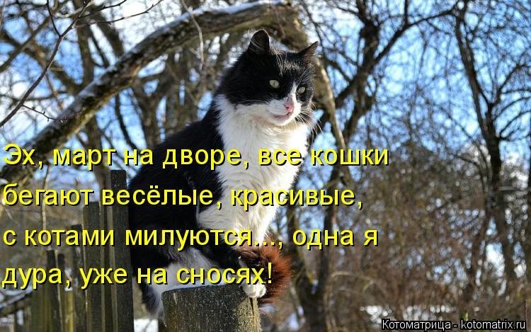 Котоматрица: Эх, март на дворе, все кошки бегают весёлые, красивые, с котами милуются..., одна я дура, уже на сносях!
