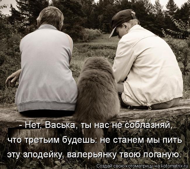 Котоматрица: - Нет, Васька, ты нас не соблазняй,  что третьим будешь: не станем мы пить  эту злодейку, валерьянку твою поганую.
