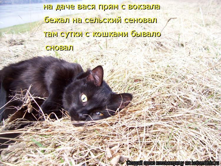 Котоматрица: на даче вася прям с вокзала бежал на сельский сеновал там сутки с кошками бывало сновал