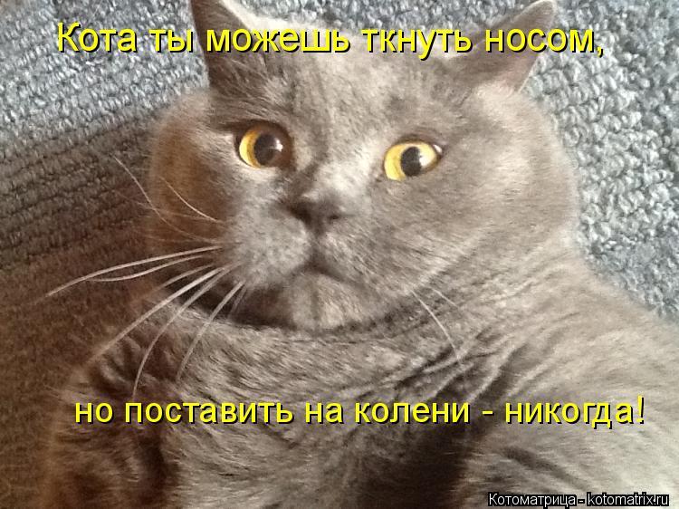 Котоматрица: Кота ты можешь ткнуть носом, но поставить на колени - никогда!