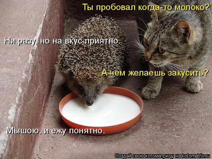 Котоматрица: Ты пробовал когда-то молоко? Ни разу, но на вкус приятно. А чем желаешь закусить? Мышою, и ежу понятно.