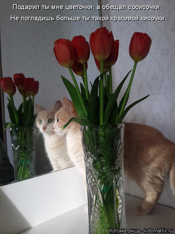 Котоматрица: Не погладишь больше ты такой красивой кисочки. Подарил ты мне цветочки, а обещал сосисочки.
