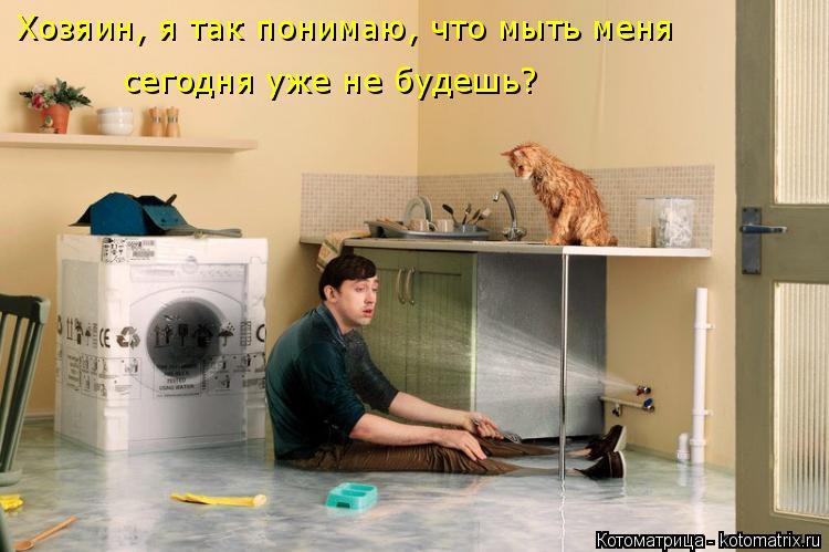 Котоматрица: Хозяин, я так понимаю, что мыть меня  сегодня уже не будешь?