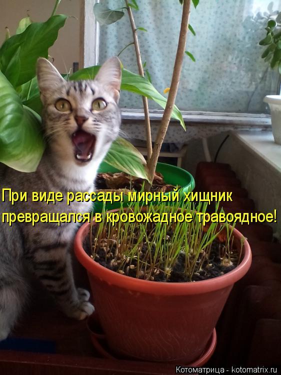 Котоматрица: При виде рассады мирный хищник превращался в кровожадное травоядное!