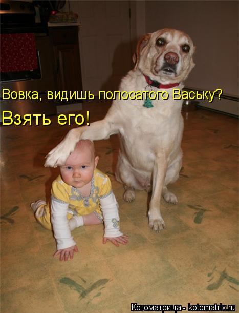 Котоматрица: Вовка, видишь полосатого Ваську? Взять его!