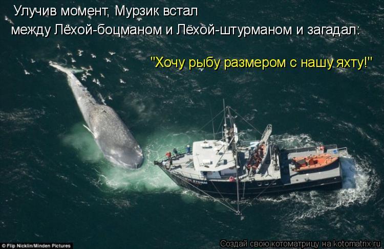 """Котоматрица: Улучив момент, Мурзик встал  между Лёхой-боцманом и Лёхой-штурманом и загадал: """"Хочу рыбу размером с нашу яхту!"""""""
