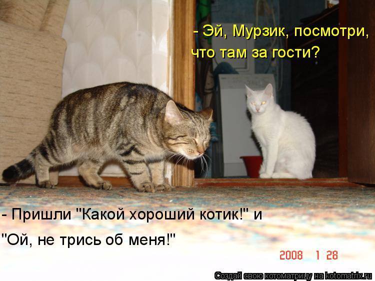 """Котоматрица: - Эй, Мурзик, посмотри,  что там за гости? - Пришли """"Какой хороший котик!"""" и """"Ой, не трись об меня!"""""""