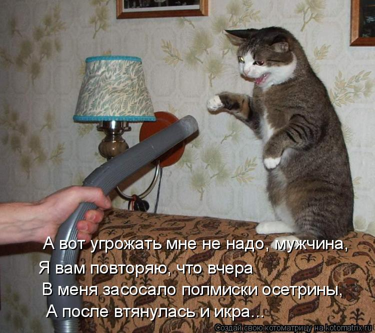 Котоматрица: Я вам повторяю, что вчера  В меня засосало полмиски осетрины, А вот угрожать мне не надо, мужчина,  А после втянулась и икра...