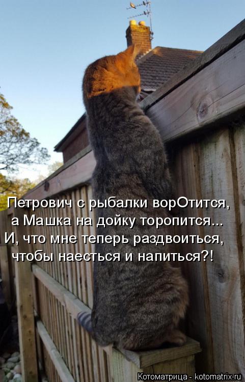 Котоматрица: Петрович с рыбалки ворОтится, а Машка на дойку торопится... И, что мне теперь раздвоиться, чтобы наесться и напиться?!