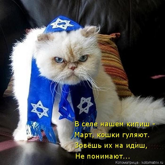 Котоматрица: В селе нашем кипиш - Не понимают... Зовёшь их на идиш, Март, кошки гуляют.