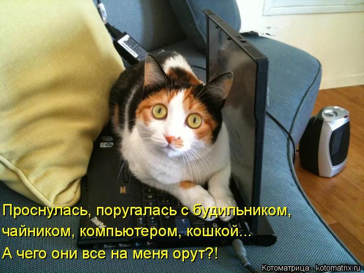 Котоматрица: Проснулась, поругалась с будильником, чайником, компьютером, кошкой... А чего они все на меня орут?!