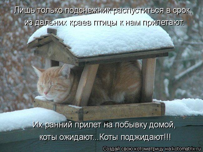 Котоматрица: Лишь только подснежник распуститься в срок, из дальних краев птицы к нам прилетают. Их ранний прилет на побывку домой, коты ожидают...Коты по