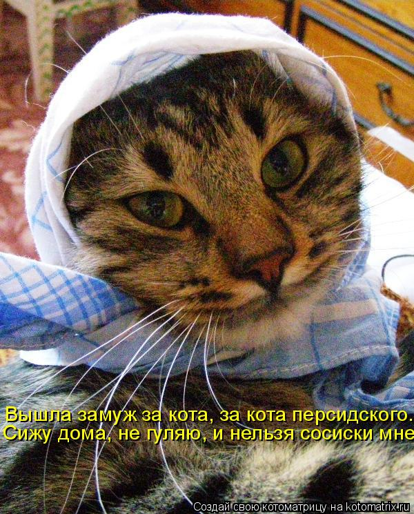 Котоматрица: Вышла замуж за кота, за кота персидского. Сижу дома, не гуляю, и нельзя сосиски мне