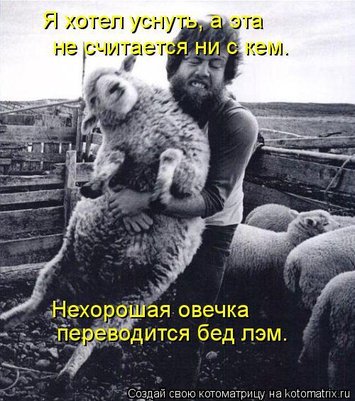 Котоматрица: Я хотел уснуть, а эта не считается ни с кем. Нехорошая овечка  переводится бед лэм.