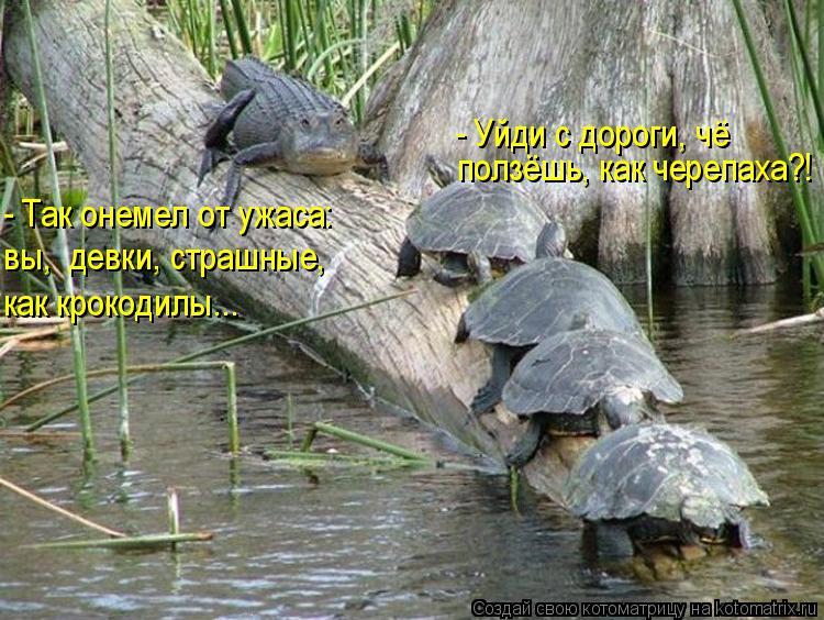 Котоматрица: ползёшь, как черепаха?! - Уйди с дороги, чё  - Так онемел от ужаса: вы,  девки, страшные, как крокодилы...