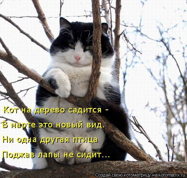 Котоматрица: Кот на дерево садится - В марте это новый вид.  Ни одна другая птица  Поджав лапы не сидит...