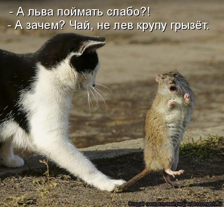 Котоматрица: - А льва поймать слабо?! - А зачем? Чай, не лев крупу грызёт.
