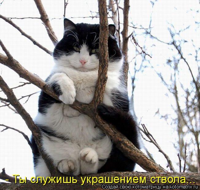 Котоматрица: - Ты служишь украшением ствола...