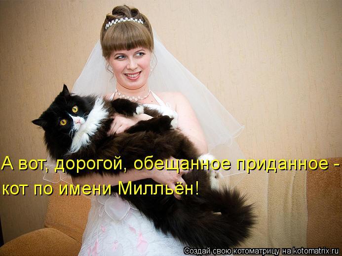 Котоматрица: А вот, дорогой, обещанное приданное - кот по имени Милльён!