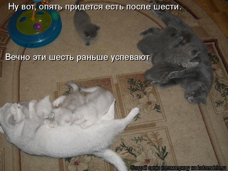 Котоматрица: Ну вот, опять придется есть после шести.  Вечно эти шесть раньше успевают