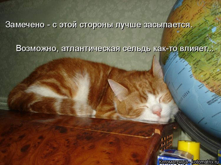 Котоматрица: Замечено - с этой стороны лучше засыпается. Возможно, атлантическая сельдь как-то влияет...