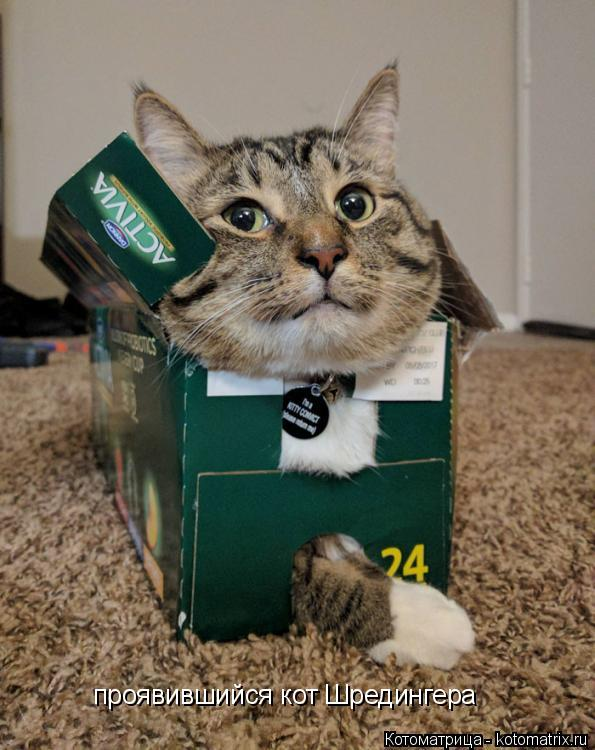 Котоматрица: проявившийся кот Шредингера