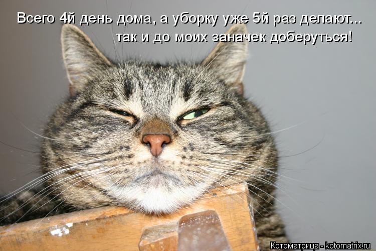 Котоматрица: Всего 4й день дома, а уборку уже 5й раз делают... так и до моих заначек доберуться!