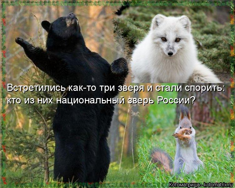 Котоматрица: Встретились как-то три зверя и стали спорить:  кто из них национальный зверь России?