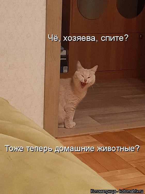 Котоматрица: Чё, хозяева, спите? Тоже теперь домашние животные?