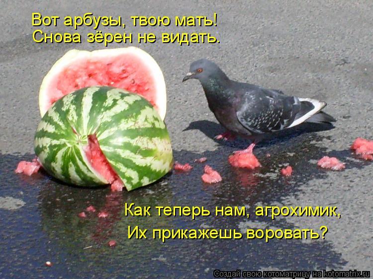Котоматрица: Как теперь нам, агрохимик, Их прикажешь воровать? Снова зёрен не видать. Вот арбузы, твою мать!
