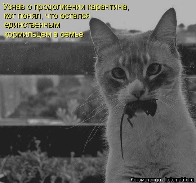Котоматрица: Узнав о продолжении карантина, кот понял, что остался единственным кормильцем в семье