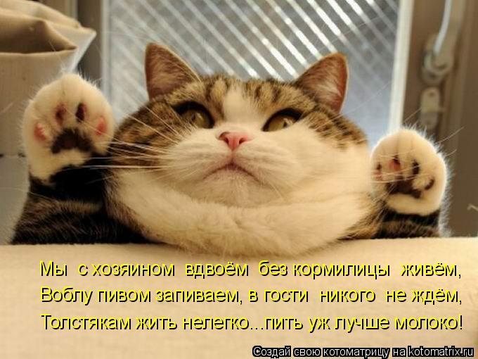 Котоматрица: Мы  с хозяином  вдвоём  без кормилицы  живём, Воблу пивом запиваем, в гости  никого  не ждём, Толстякам жить нелегко...пить уж лучше молоко!