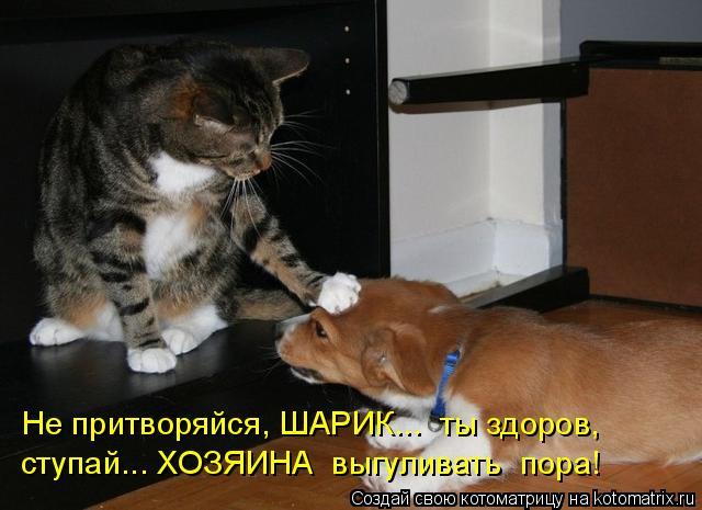 Котоматрица: Не притворяйся, ШАРИК...  ты здоров, ступай... ХОЗЯИНА  выгуливать  пора!
