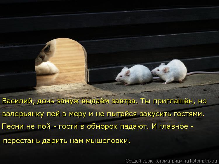 Котоматрица: Василий, дочь замуж выдаём завтра. Ты приглашён, но  валерьянку пей в меру и не пытайся закусить гостями. перестань дарить нам мышеловки. Пес